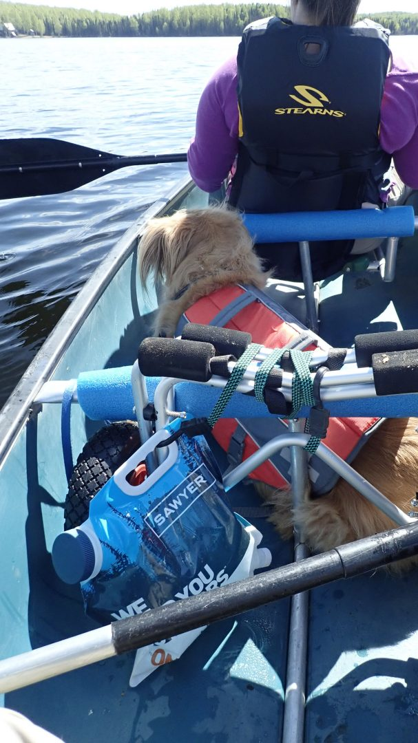Dog sitting in canoe on the water