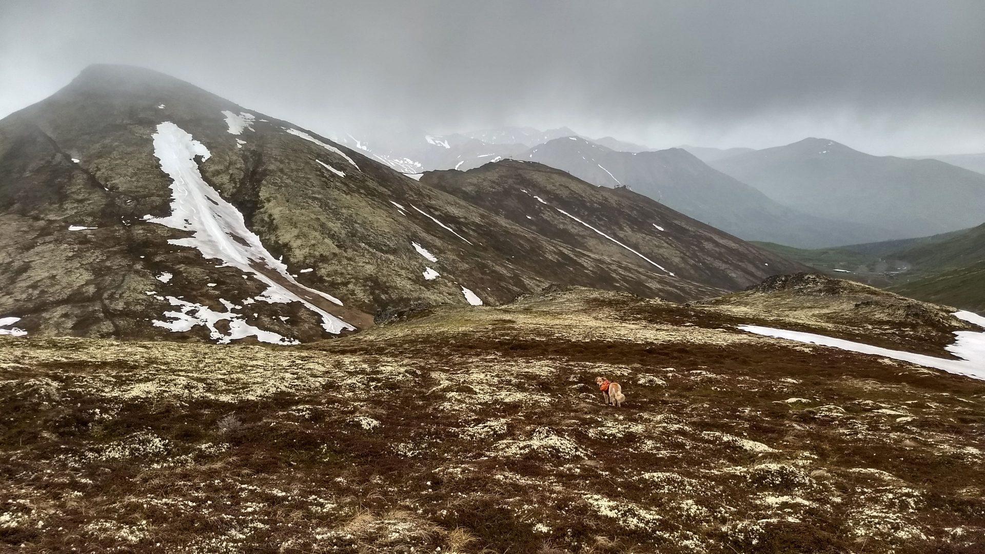Saddle between Mt. Gordon Lyon and Rendezvous Peak