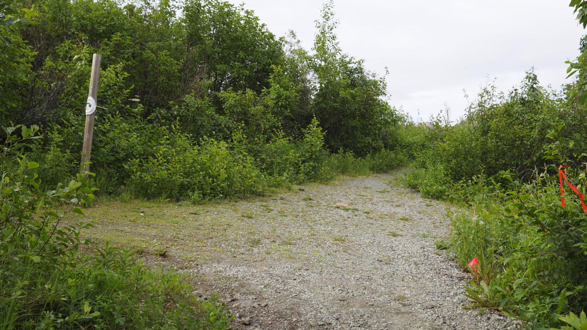 Trail junction in Alaska