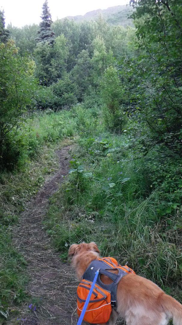 Brushy trail and dog on leash