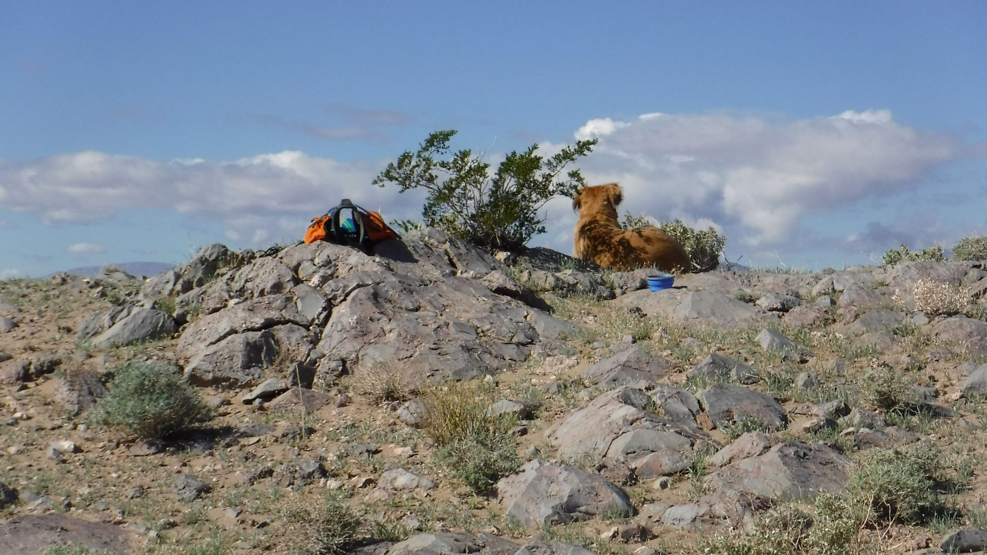 Golden retriever on top of a SOTA peak