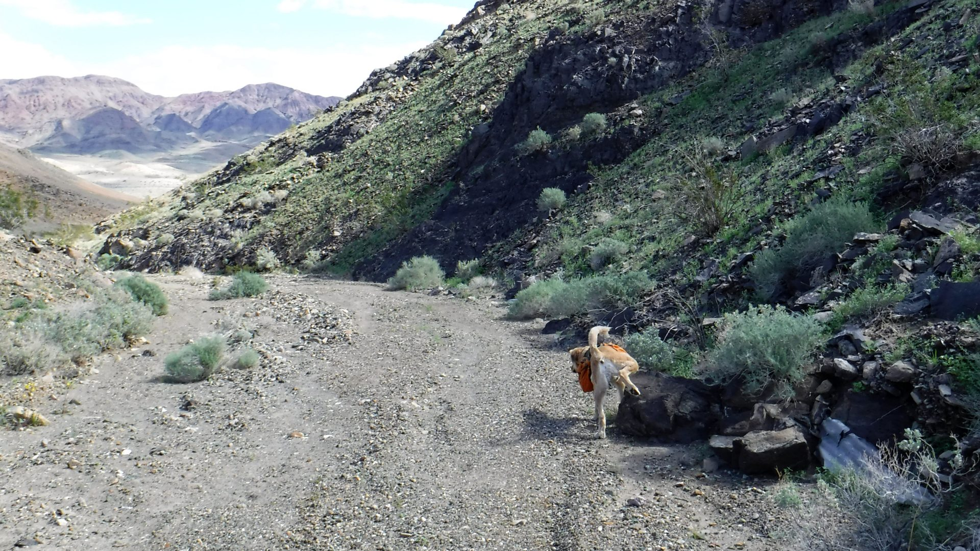 Dog peeing in Death Valley