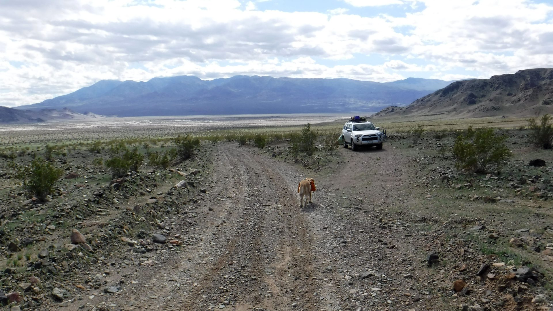 Dog and 4runner in Death Valley